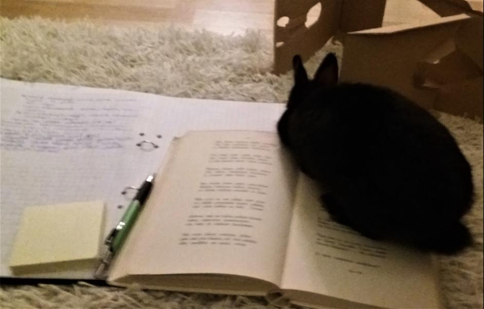 Muistiinpanoja lattialla – pupu asettuu kirjan päälle.